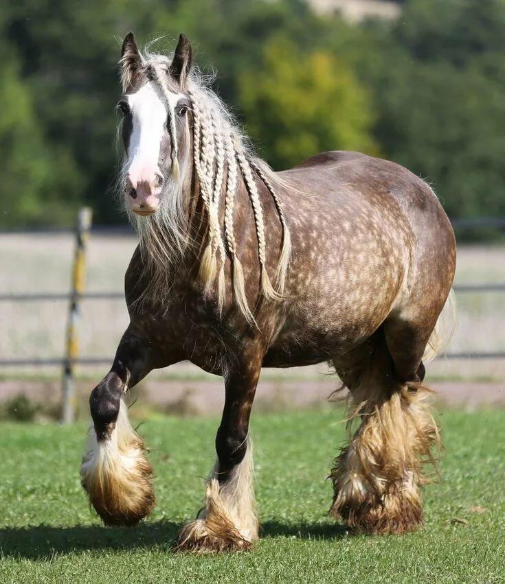 картинки про породистых лошадей ряд